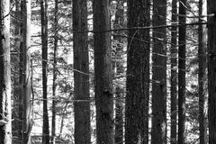 沿华盛顿海岸美国的树 库存照片