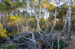 沿地中海海边的厚实的木头在塔拉贡纳,西班牙附近 库存照片