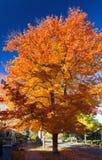 沿城市街道的高五颜六色的秋天树 免版税库存照片