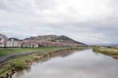 沿城石河岸的樱桃树在宫城, Tohoku,日本在春天 这个hanami斑点称` Shiroishigawa-tsutsumi Hitom 库存照片