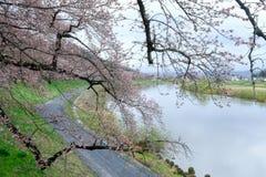 沿城石河岸的樱桃树在宫城, Tohoku,日本在春天 这个hanami斑点称` Shiroishigawa-tsutsumi Hitom 免版税库存图片
