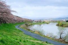 沿城石河岸的樱桃树在宫城, Tohoku,日本在春天 这个hanami斑点称` Shiroishigawa-tsutsumi Hitom 库存图片