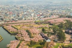 沿堡垒Goryokaku护城河的樱桃树如被看见从Goryokaku塔,函馆,北海道,日本在春天 库存照片