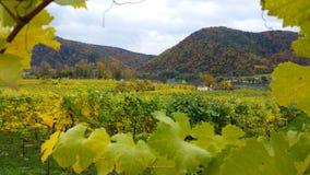 沿多瑙河银行的酒围场在Durnstein镇,奥地利附近的秋天 免版税库存图片