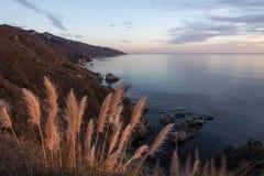 沿大瑟尔海岸线的蒲苇在日落 库存图片