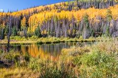 沿学士圈, Creede科罗拉多的白杨木 库存图片
