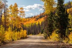 沿学士圈, Creede科罗拉多的白杨木 免版税库存照片