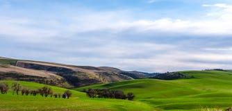 沿小山的冬麦在Dalles南部,俄勒冈 免版税库存图片