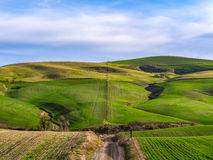 沿小山的冬麦在Dalles南部,俄勒冈 图库摄影