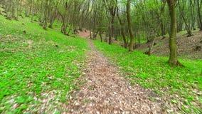 沿小径在森林里 影视素材