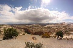 沿小路12,犹他,美国的风景看法 免版税库存照片