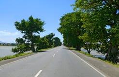 沿尼罗的银行的路。沿的异想天开的树 库存照片