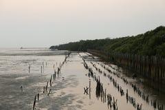 沿岸的美洲红树在轰隆Pu海边在Samut Prakarn,泰国 免版税图库摄影
