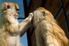 沿岸航行海南岛短尾猿猴子猴子nanwan本质保护的预留南状态 库存照片