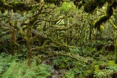 沿开普勒轨道的豪华的森林 免版税图库摄影