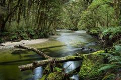 沿开普勒轨道的豪华的森林 库存图片