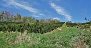 沿弗吉尼亚爬行物足迹的圣诞树农场 库存图片