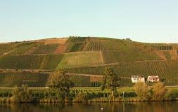 沿德国摩泽尔河葡萄园 免版税库存图片
