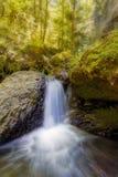 沿戈顿小河的瀑布下午在俄勒冈 免版税库存照片
