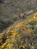 沿战士足迹的鸦片领域,圣卡塔利娜山,亚利桑那 库存照片