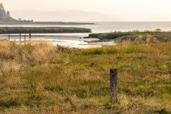 沿敞篷运河海岸线的沼泽地  免版税库存图片