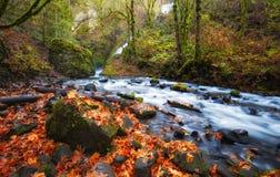 沿新娘面纱小河哥伦比亚河峡谷的秋天 图库摄影