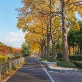 沿旁边名古屋城堡的人行道 免版税库存图片