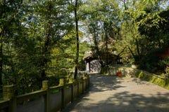 沿木质的路面的地衣隐蔽的石楼梯栏杆在晴朗的wi 库存照片