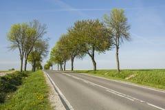 沿柏油路的树 免版税库存图片