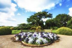 沿树的道路在与蓝天的夏天 免版税库存照片