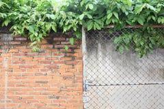 沿桔子的篱芭 免版税图库摄影