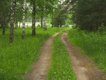 沿桦树的森林公路 它` s春天 免版税库存图片