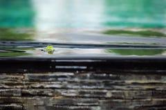 沿水的小干燥叶子流程从游泳池边缘下跌 免版税图库摄影