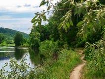 沿河的小径,晴朗的春日 狭窄的足迹通过沿河的树 免版税库存图片