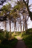 沿沿海小山的高针叶树 免版税库存照片