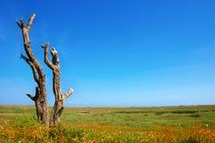 沿海停止的沼泽盐豆木 免版税库存图片