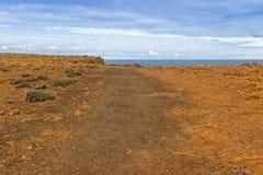 沿海峭壁风景在化石森林步行,海角桥梁的 免版税库存照片