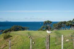 沿海新的农村场面西兰 免版税库存照片