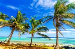 沿海棕榈树 库存图片