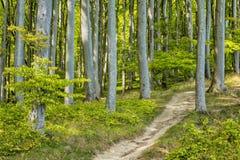 沿海森林 免版税库存照片