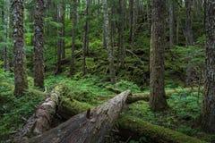 沿海森林 图库摄影