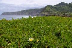 沿海植物群,圣地米格尔,亚速尔群岛 免版税库存照片