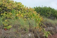 沿海植被在佛罗里达群岛 库存照片