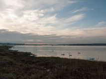沿海水域与白色疣鼻天鹅家庭天天空的海洋场面 免版税图库摄影