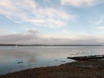 沿海水域与白色疣鼻天鹅家庭天天空的海洋场面 免版税库存图片