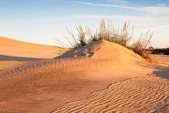 沿海沙子Lanscape 免版税库存照片