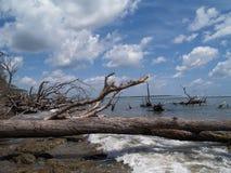 沿海滩划分为的海洋结构树风化了 免版税库存照片