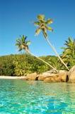 沿海滩棕榈树 免版税库存照片
