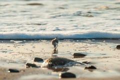 沿海滩的典型的冬天早晨 库存照片
