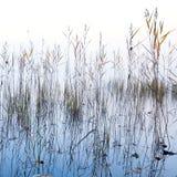 沿海芦苇和光亮的湖在雾浇灌 库存照片
